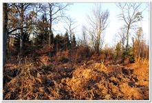 La Forêt du gros Chêne à Haguenau-0018