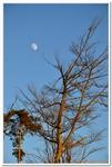 La Forêt du gros Chêne à Haguenau-0002