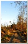 La Forêt du gros Chêne à Haguenau-0003