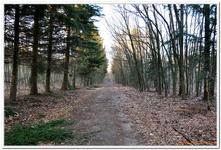 La Forêt du gros Chêne à Haguenau-0007