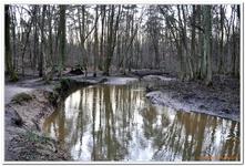 La Forêt du gros Chêne à Haguenau-0008