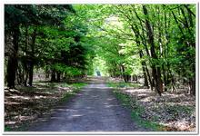 La Forêt du gros Chêne à Haguenau-0013