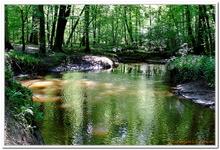 La Forêt du gros Chêne à Haguenau-0015