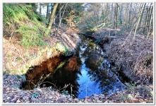 La Forêt du gros Chêne à Haguenau-0016