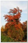 La Forêt d\'Offendorf-0006