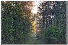 La Forêt d\'Offendorf-0012