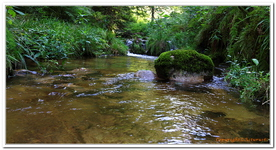 La Cascade d\'Allerheiligen-0001