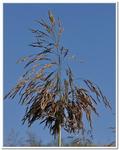Les Plantes-0014