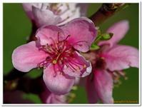 Les Fleurs-0005