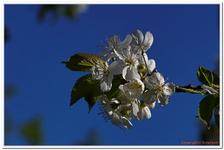 Les Fleurs-0011