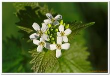 Les Fleurs-0012