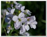 Les Fleurs-0014