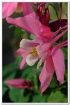 Les Fleurs-0017