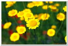 Les Fleurs-0018