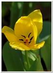 Les Fleurs-0020