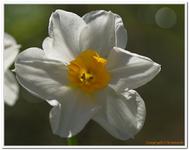 Les Fleurs-0022