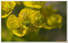 Les Fleurs-0023