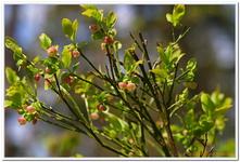 Les Fleurs-0025
