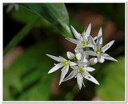 Les Fleurs-0026