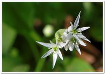 Les Fleurs-0027