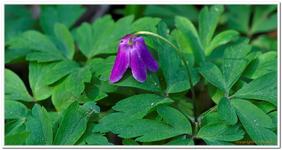 Les Fleurs-0028