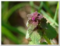 Les Fleurs-0029