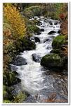 La Cascade de Triberg-0001
