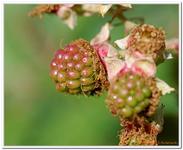 Les Fruits-00006