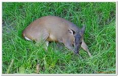Parc Zoologique de Salzbourg-0017