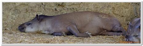 Parc Zoologique de Salzbourg-0026