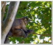 Parc Zoologique de Salzbourg-0033