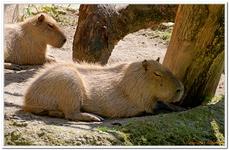Parc Zoologique de Salzbourg-0035