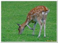 Parc Animalier de Ferleiten-0006