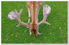 Parc Animalier de Ferleiten-0013