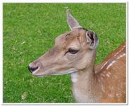 Parc Animalier de Ferleiten-0015