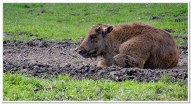 Parc Animalier de Ferleiten-0016
