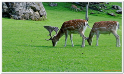 Parc Animalier de Ferleiten-0018