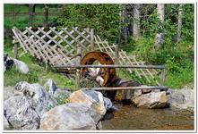 Parc Animalier de Ferleiten-0023