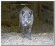 Parc Animalier de Ferleiten-0025