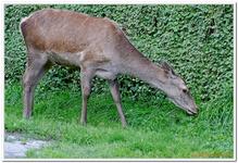 Parc Animalier de Ferleiten-0031