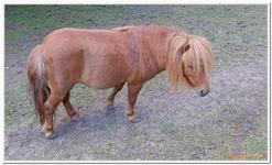 Parc Animalier de Ferleiten-0032