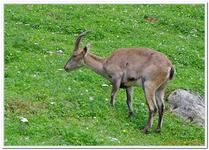 Parc Animalier de Ferleiten-0038