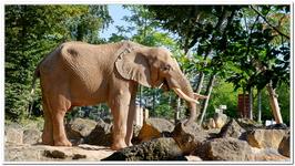 Zoo Amnéville-0008