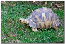 Zoo Amnéville-0012