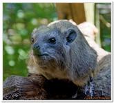 Zoo Amnéville-0013