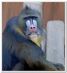 Zoo Amnéville-0022