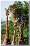 Zoo Amnéville-0031