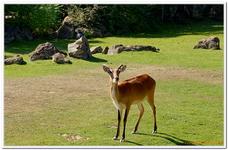 Zoo Amnéville-0033
