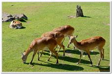 Zoo Amnéville-0038
