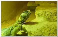 Zoo Amnéville-0059